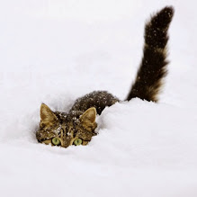 Stealth Kitty